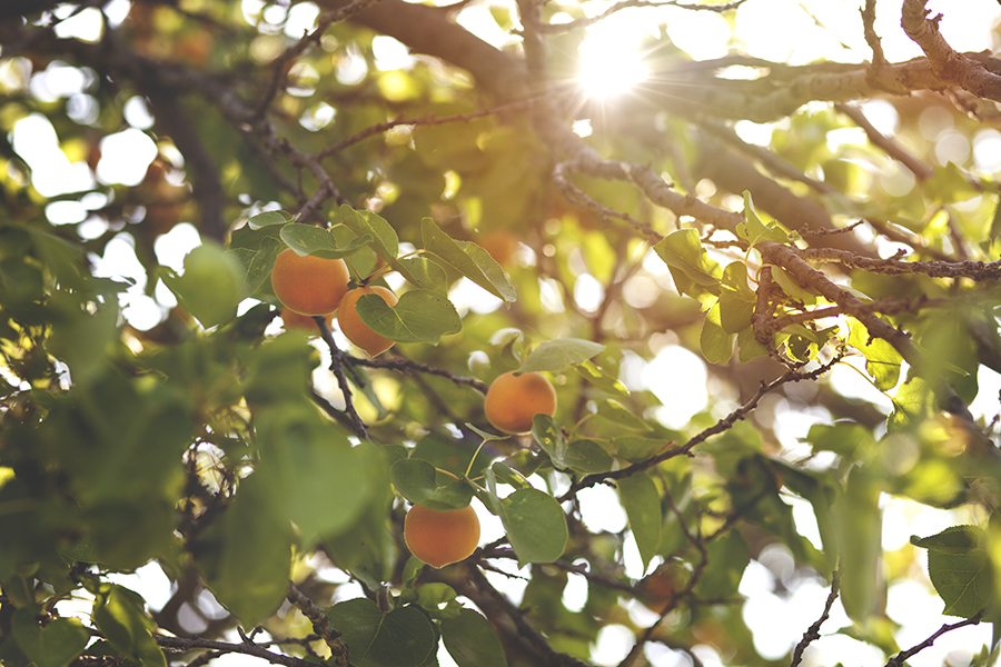 Apricot_Jax Creations Photography_5449